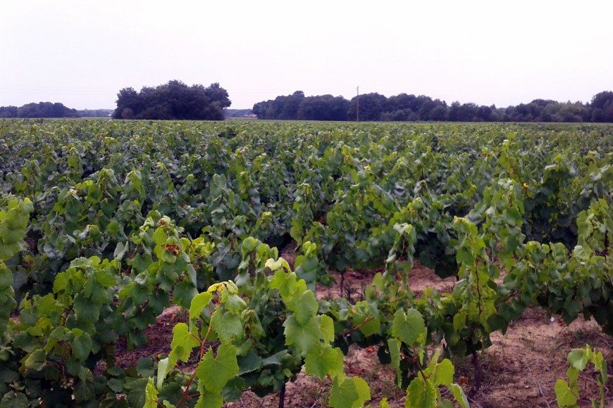Le Domaine du Pontreau : un terroir en pays nantais